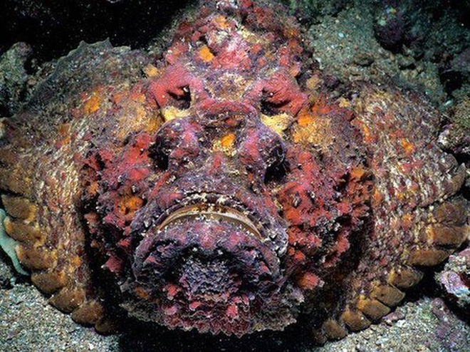 Loại cá nhìn như quái vật cực độc nhưng là đặc sản giá 2-3 triệu đồng/kg - 1
