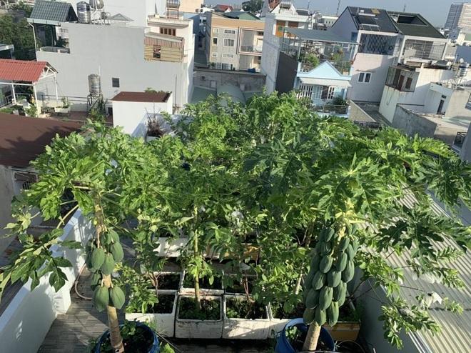 Loạt gia đình ở Việt Nam đưa vườn trái cây lên cao, thu hoạch cả tạ/năm - 1