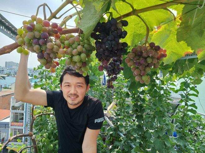 Loạt gia đình ở Việt Nam đưa vườn trái cây lên cao, thu hoạch cả tạ/năm - 12