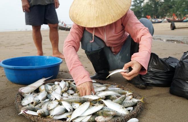 Những mẻ cá chạy bão số 5 của ngư dân xứ Thanh - 10