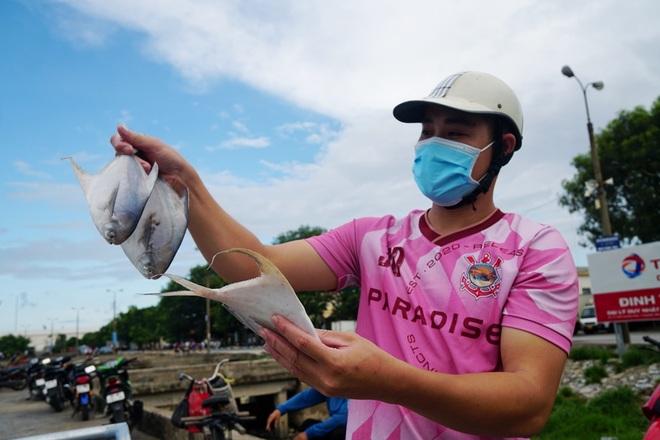 Những mẻ cá chạy bão số 5 của ngư dân xứ Thanh - 12