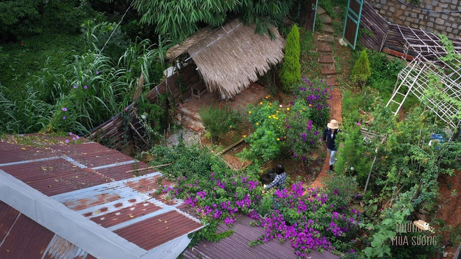 The simple life of thousands of people dreaming of a girl who builds a wooden house and grows vegetables in Da Lat - 2