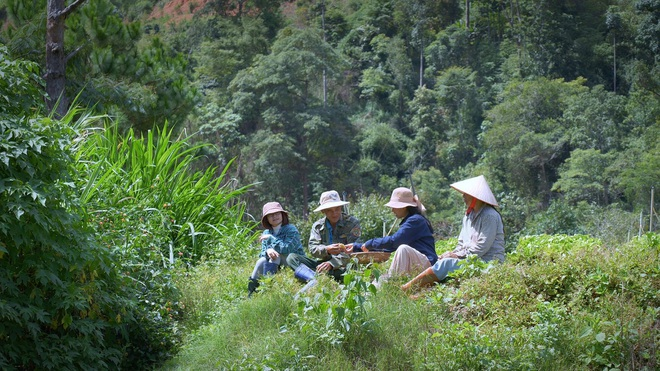 The simple life of thousands of people's dreams of a girl who builds a wooden house and grows vegetables in Da Lat - 8