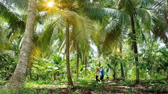 Kẹo dừa Bến Tre, thức quà ngọt ngào mang hương vị truyền thống - 2