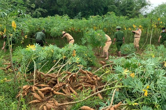 Các chiến sĩ công an chạy đua với mưa bão để thu hoạch sắn giúp người dân  - 3