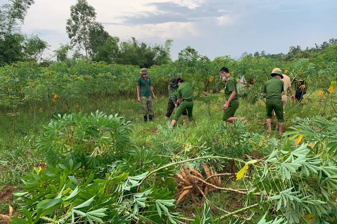 Các chiến sĩ công an chạy đua với mưa bão để thu hoạch sắn giúp người dân  - 7