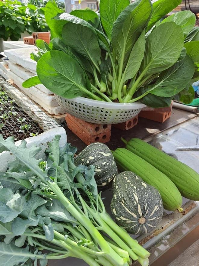 Chăm cháu ăn dặm, bà nội Vũng Tàu làm vườn rau trái sum suê trên nóc nhà - 11