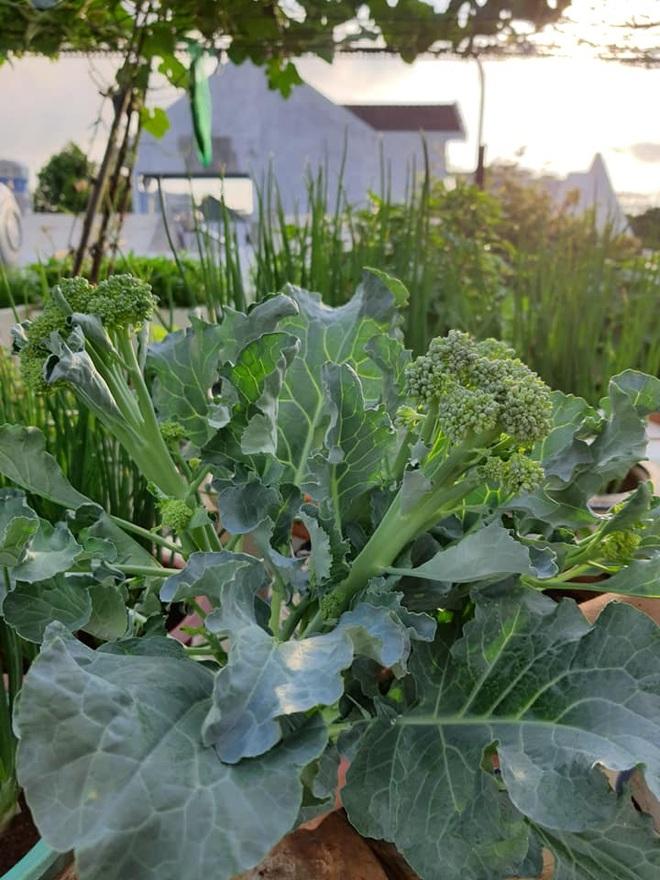 Chăm cháu ăn dặm, bà nội Vũng Tàu làm vườn rau trái sum suê trên nóc nhà - 6