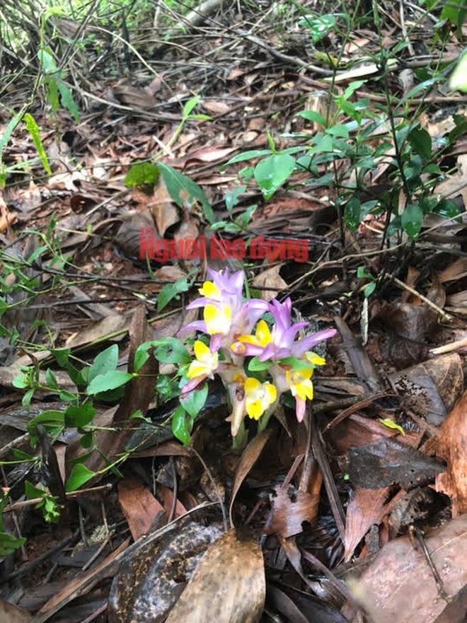 Bông giờ - quà độc lạ của mùa thu xứ Nẫu - 3