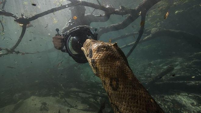 Nhiếp ảnh gia liều mình đối mặt mãng xà dài hơn 6 m - 1