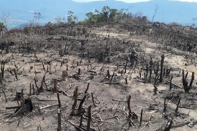 Phát hiện gần 6 ha rừng tự nhiên bị phá, đốt sạch - 1