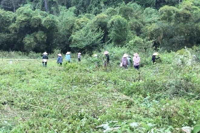 Một hộ dân bị nhiều người cùng xóm dỡ hàng rào, ùa vào chặt phá vườn cây - 2
