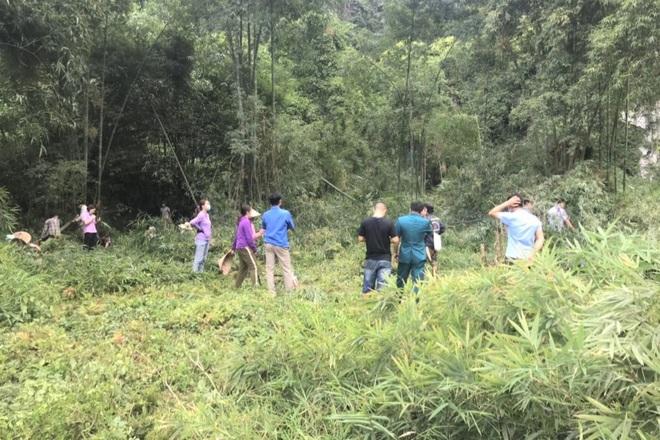 Một hộ dân bị nhiều người cùng xóm dỡ hàng rào, ùa vào chặt phá vườn cây - 3