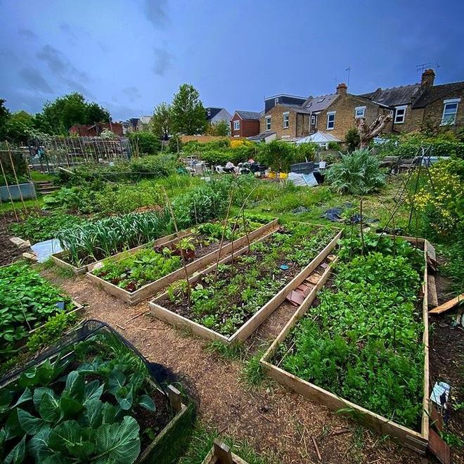 Cô gái trẻ dùng côn trùng có lợi diệt sâu hại ở khu vườn ngập rau trái - 3