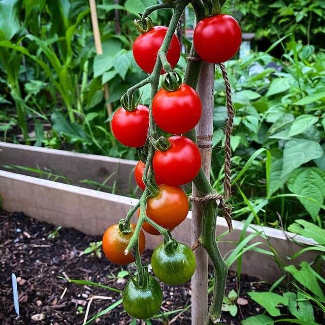 Cô gái trẻ dùng côn trùng có lợi diệt sâu hại ở khu vườn ngập rau trái - 6