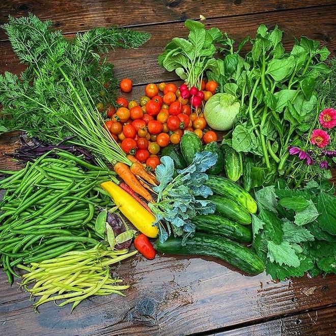 Cô gái trẻ dùng côn trùng có lợi diệt sâu hại ở khu vườn ngập rau trái - 7