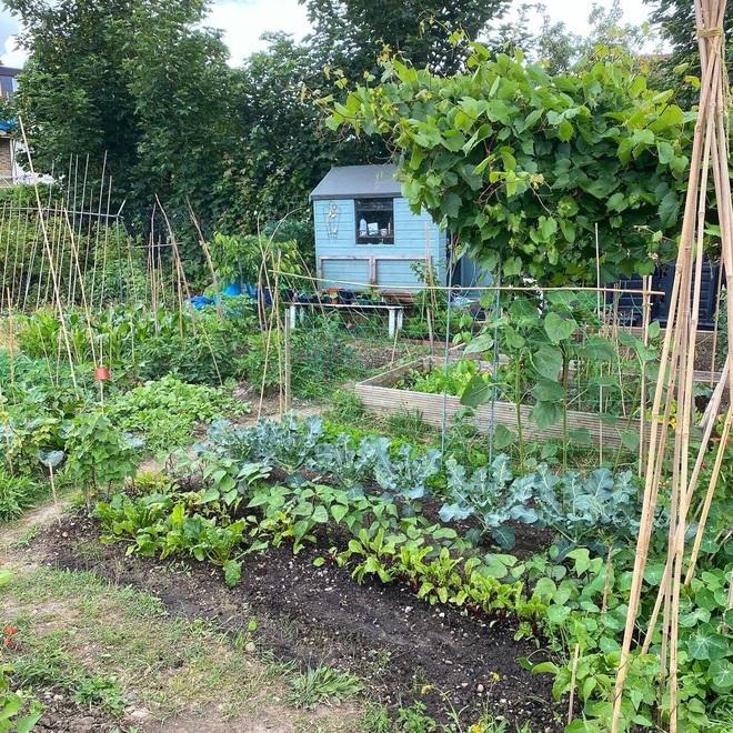 Cô gái trẻ dùng côn trùng có lợi diệt sâu hại ở khu vườn ngập rau trái - 2