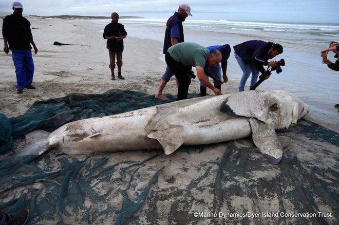 Điểm mặt những sinh vật kỳ dị từng trôi dạt vào bãi biển - 3