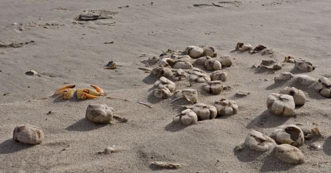 Điểm mặt những sinh vật kỳ dị từng trôi dạt vào bãi biển - 5