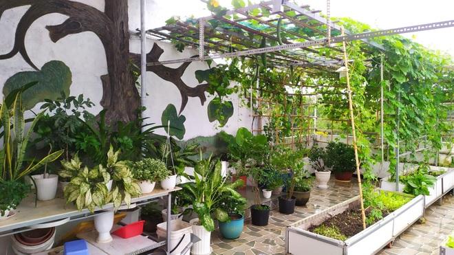 Không gian xanh mướt như góc du lịch miễn phí của gia đình ở Bình Thuận - 1