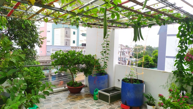 Không gian xanh mướt như góc du lịch miễn phí của gia đình ở Bình Thuận - 2