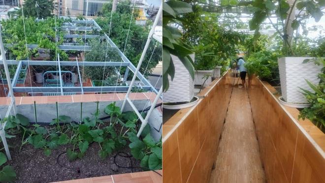 Ông bố đảm vác vật liệu lên sân thượng, xây bồn trồng đủ loại rau trái - 2