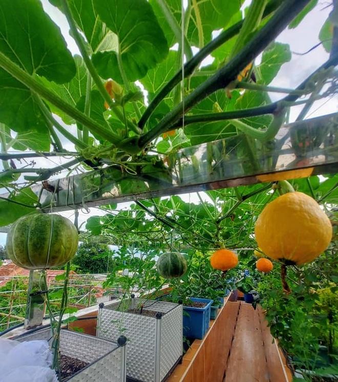 Ông bố đảm vác vật liệu lên sân thượng, xây bồn trồng đủ loại rau trái - 3