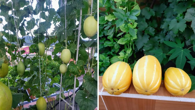 Ông bố đảm vác vật liệu lên sân thượng, xây bồn trồng đủ loại rau trái - 4