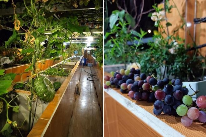 Ông bố đảm vác vật liệu lên sân thượng, xây bồn trồng đủ loại rau trái - 5