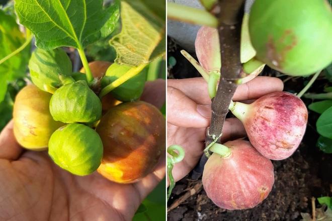 Ông bố đảm vác vật liệu lên sân thượng, xây bồn trồng đủ loại rau trái - 6