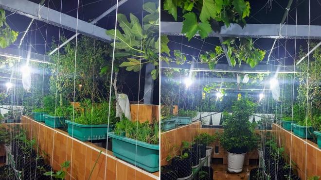 Ông bố đảm vác vật liệu lên sân thượng, xây bồn trồng đủ loại rau trái - 7