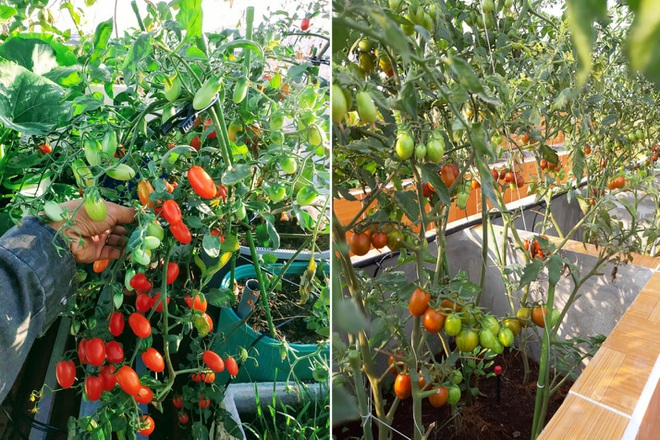 Ông bố đảm vác vật liệu lên sân thượng, xây bồn trồng đủ loại rau trái - 8