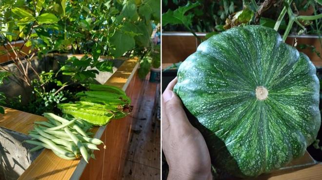 Ông bố đảm vác vật liệu lên sân thượng, xây bồn trồng đủ loại rau trái - 9