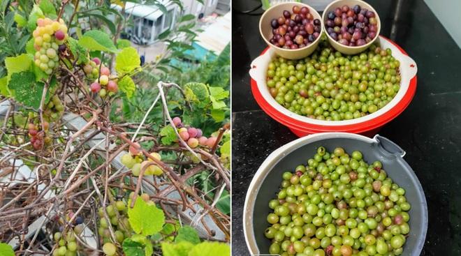 Ông bố đảm vác vật liệu lên sân thượng, xây bồn trồng đủ loại rau trái - 11