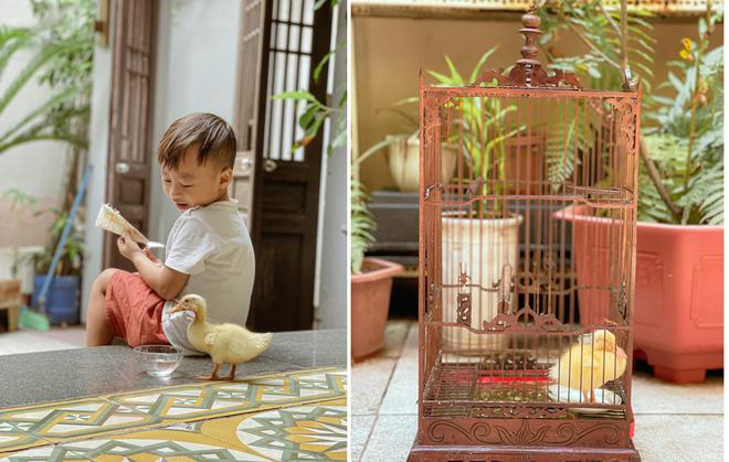Trào lưu ấp trứng, nuôi vịt làm thú cưng cho con trong mùa dịch - 6
