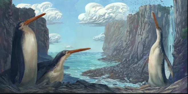 Phát hiện chim cánh cụt khổng lồ thời cổ đại, cao bằng con người - 1