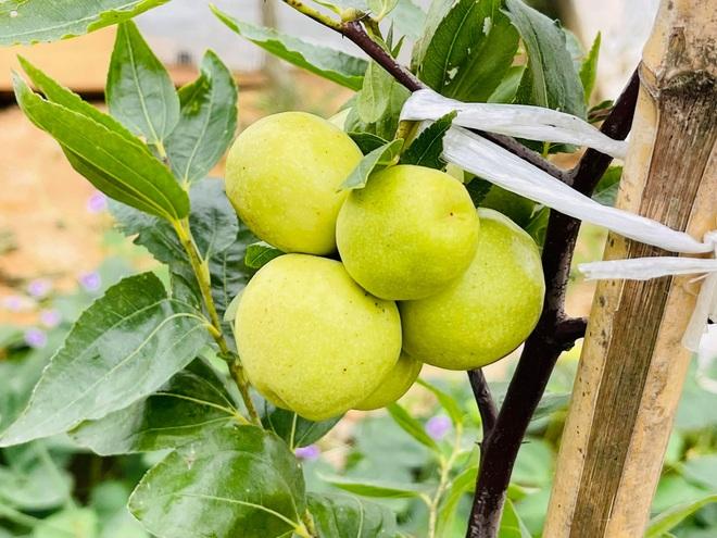 Mẹ Việt tự cuốc đất trồng rau, làm vườn hữu cơ  tại Hàn Quốc - 5