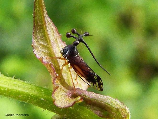 Kỳ quái với dáng vẻ ngoài hành tinh của loài côn trùng ăn lá - 1