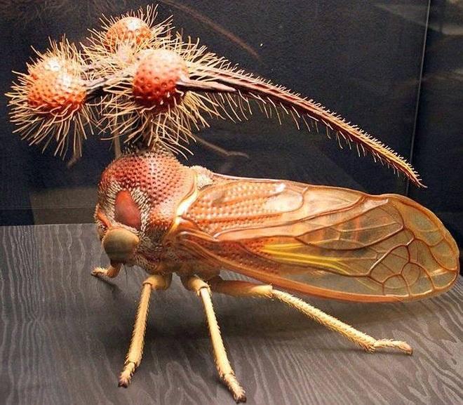 Kỳ quái với dáng vẻ ngoài hành tinh của loài côn trùng ăn lá - 3