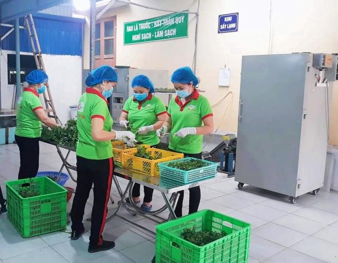 Bỏ phố về quê làm bột rau, 8X Hải Phòng thu tiền tỷ mỗi năm - 4