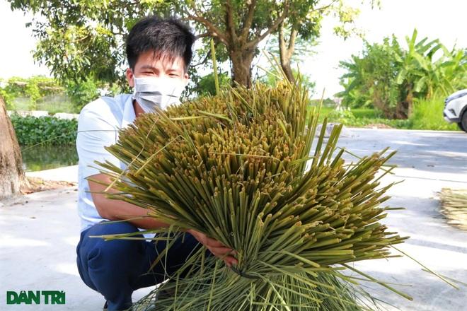 Sống khỏe trong dịch bệnh nhờ cuộn rơm đuôi trâu xuất khẩu sang Nhật - 5