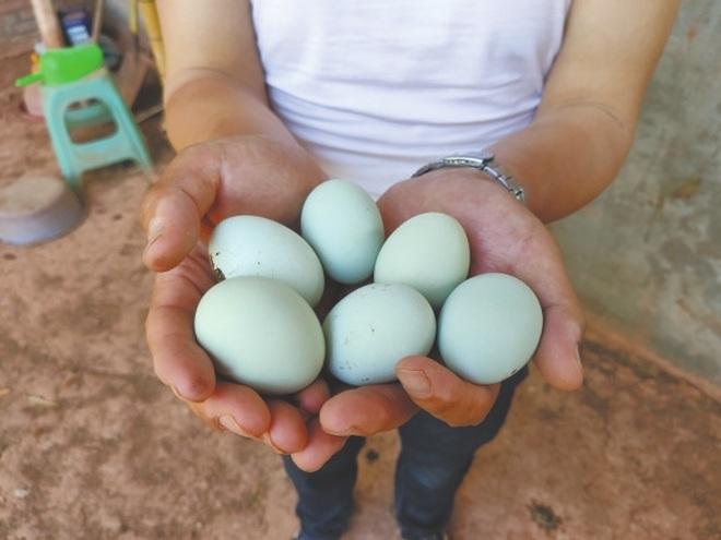 Vợ chồng thạc sĩ nghỉ việc về nuôi gà thả đồi, thu nhập 3,5 tỷ đồng/năm - 2