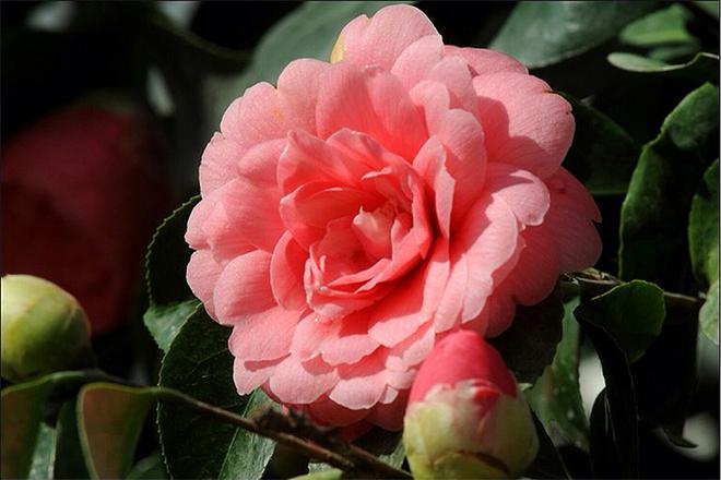 Loài hoa hiếm nhất thế giới, chỉ xuất hiện ở đúng 2 địa điểm - 3