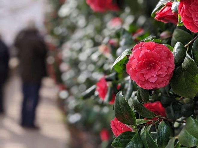 Loài hoa hiếm nhất thế giới, chỉ xuất hiện ở đúng 2 địa điểm - 2