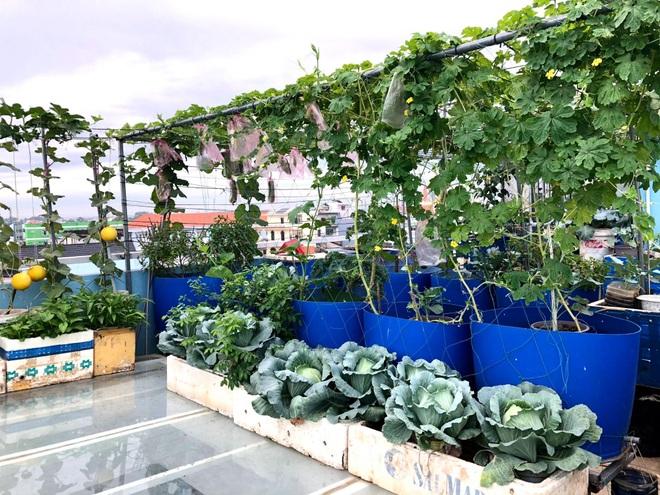 Bất ngờ với vườn rau trái đỉnh cao trên nóc nhà tại Đồng Nai - 1