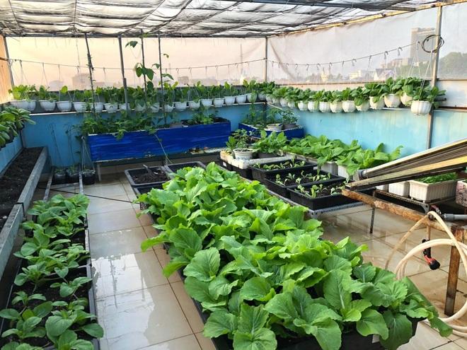 Bất ngờ với vườn rau trái đỉnh cao trên nóc nhà tại Đồng Nai - 2