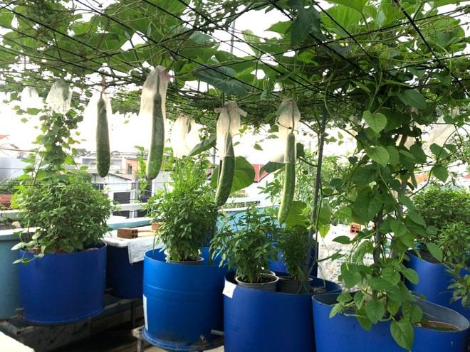 Bất ngờ với vườn rau trái đỉnh cao trên nóc nhà tại Đồng Nai - 3