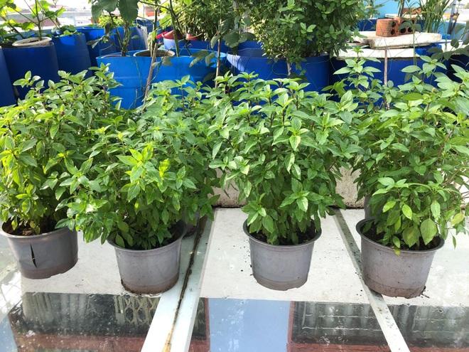 Bất ngờ với vườn rau trái đỉnh cao trên nóc nhà tại Đồng Nai - 5