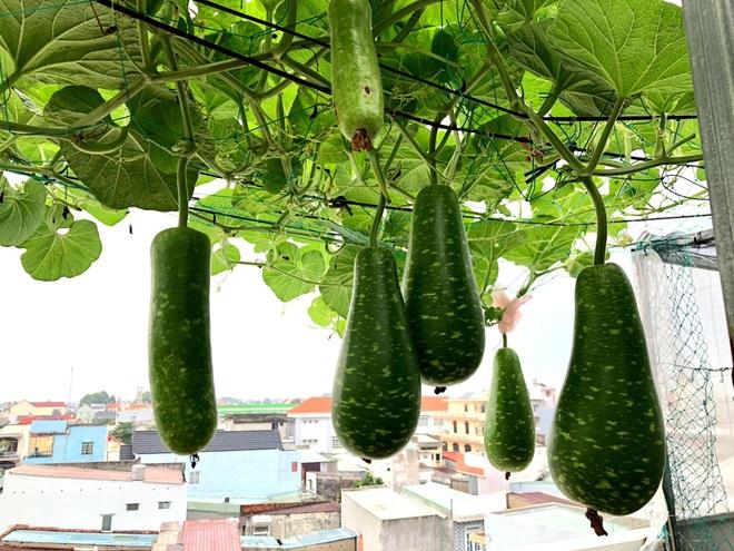 Bất ngờ với vườn rau trái đỉnh cao trên nóc nhà tại Đồng Nai - 6