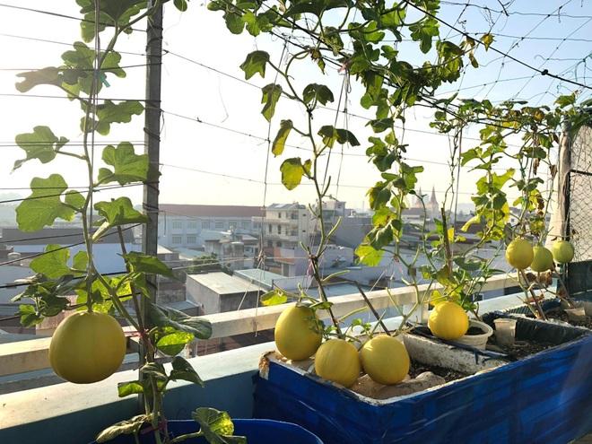 Bất ngờ với vườn rau trái đỉnh cao trên nóc nhà tại Đồng Nai - 9